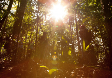 How we unlock transformational change to save our Forests