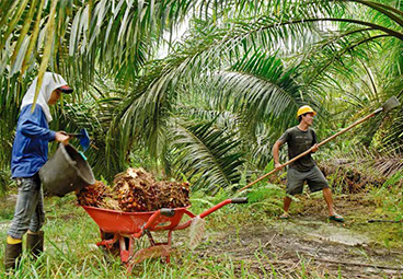 Smallholder finance in the oil palm sector