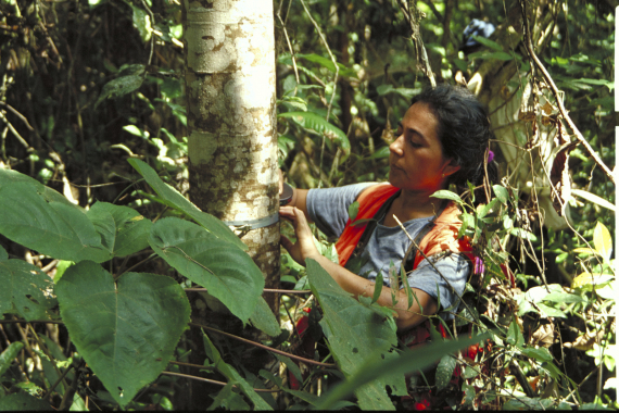 measure trees woman local TNC